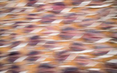 Pictures – im Spannungsfeld zwischen Kunst und Kommerz