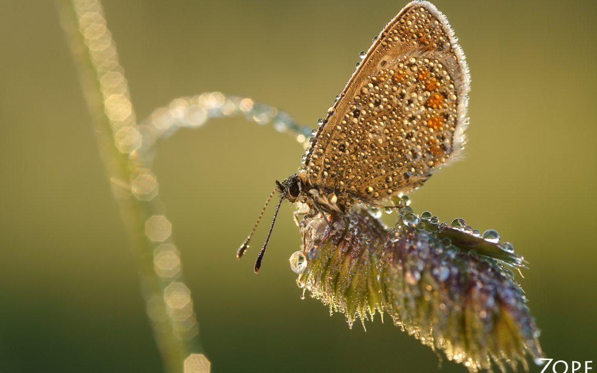 """""""Schmetterlinge sind wie Models"""""""